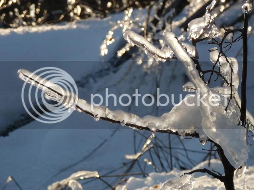 Photo P2880582.jpg