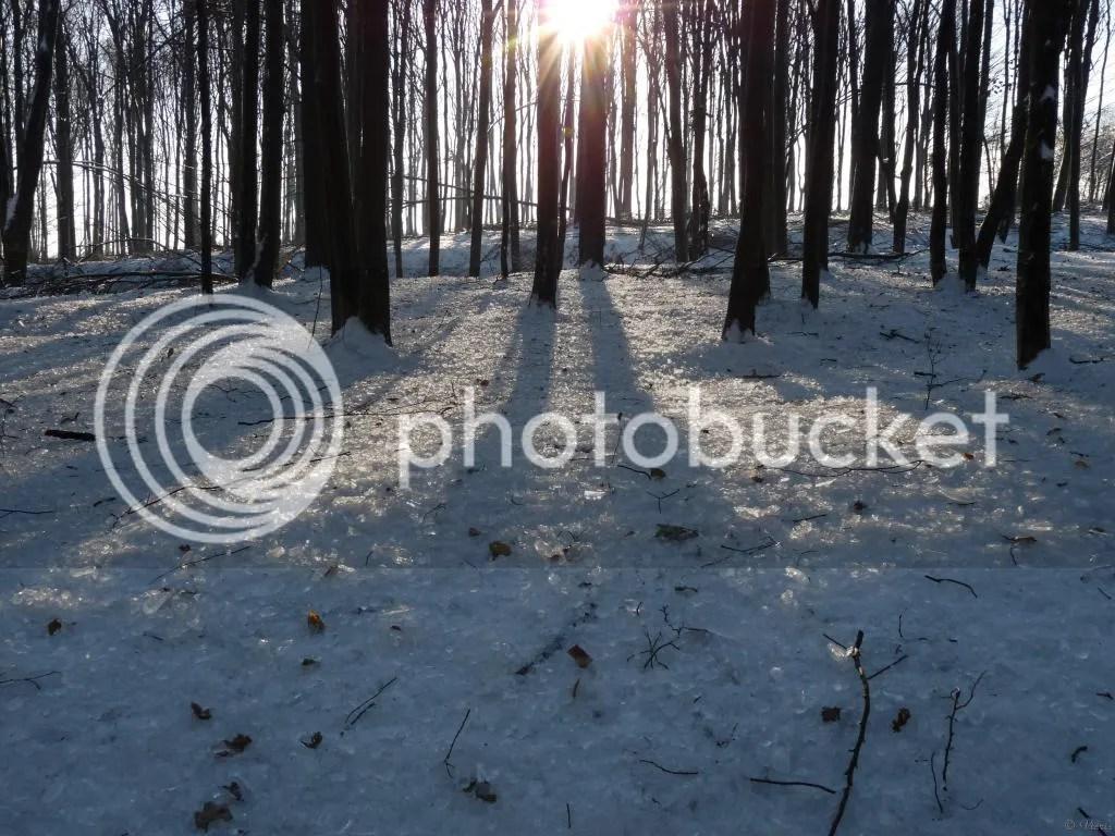 Photo P2880634.jpg