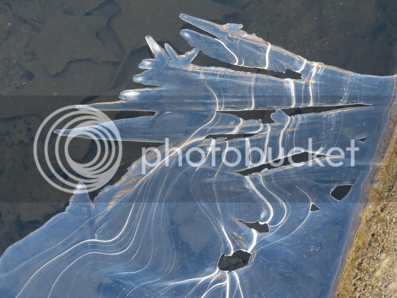 Shoreline Ice photo IMG_7341_zpsa5442ea8.jpg