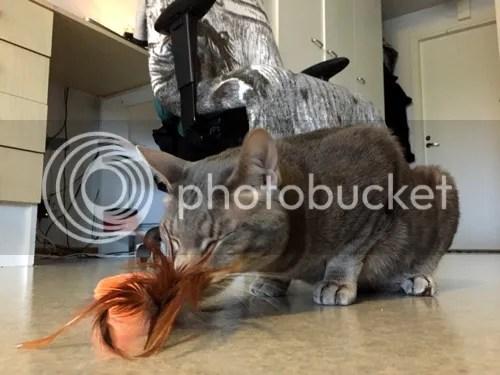 Nautittu pieniä määriä kissanminttua