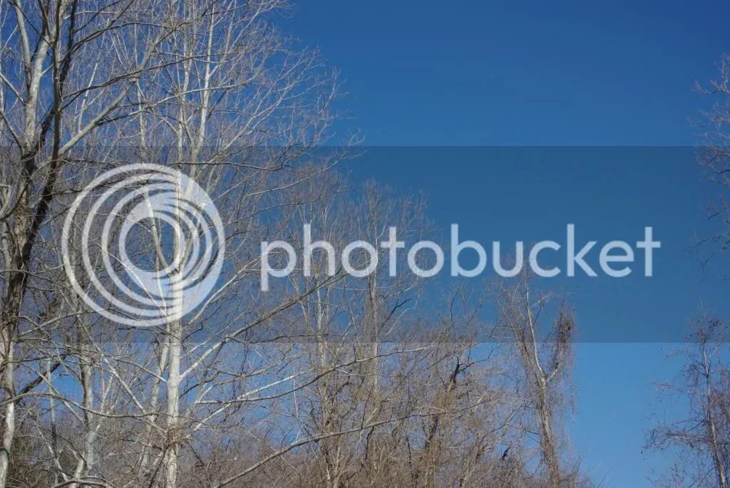 photo IMGP0001-001_zps317787f6.jpg
