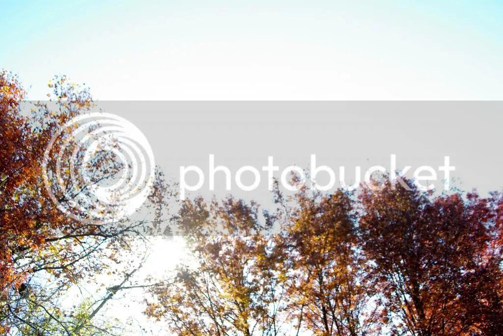 photo IMGP0001_zps4388f60f.jpg