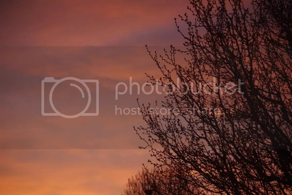 photo IMGP0033_zpsec028c86.jpg