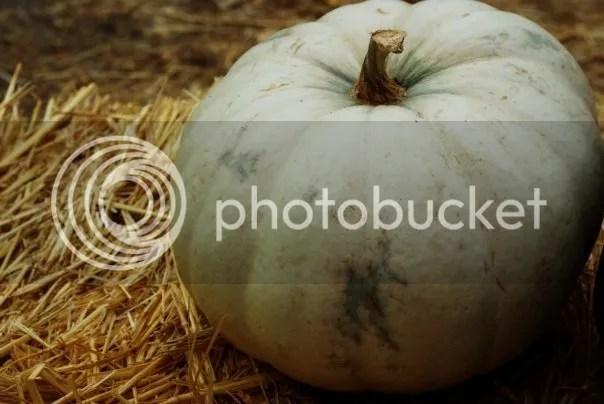 photo pumpkin_zps477d10af.jpg