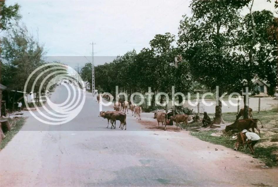 photo khoanh-khac-kho-quen-ve-quang-tri-nam-1967-hinh-14_zpsvkrd1svr.jpg