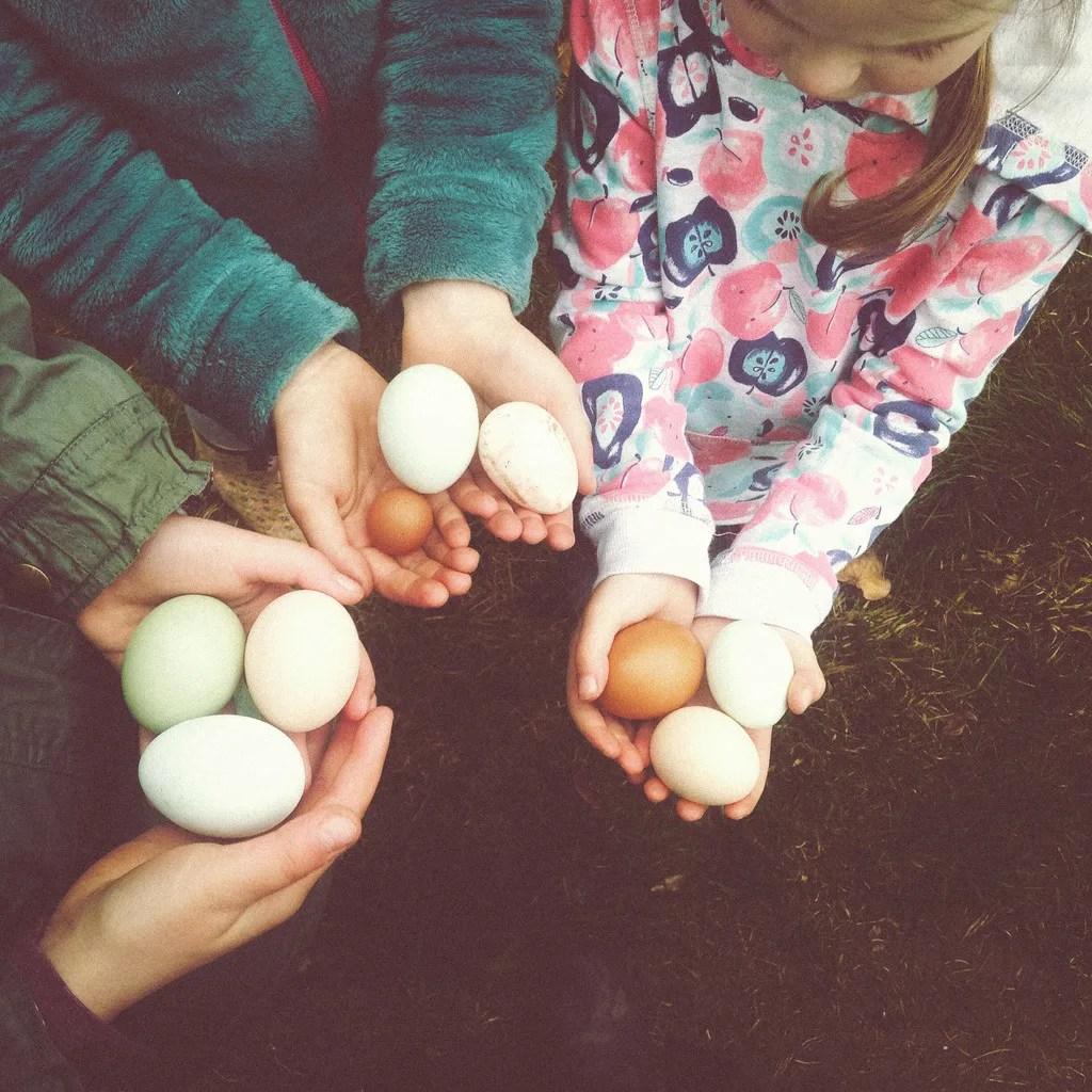 photo Eggs_zpsbz4zkngt.jpg
