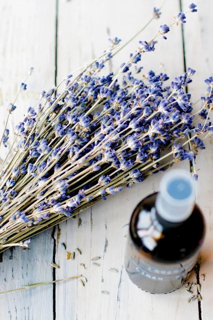 photo lavender_zpskhyuoax5.jpg