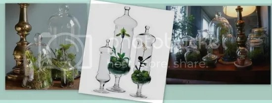 Recycled Terrariums