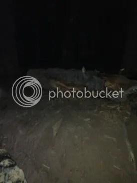 photo 8FB7380B-6D19-44BC-9F26-65DE0F89AEDD_zps6b3fotkr.jpg
