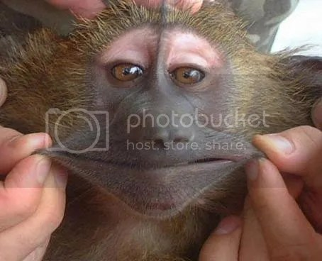 funny animals photo: Smile funny-monkey-pictures_zps501a4ce6.jpg