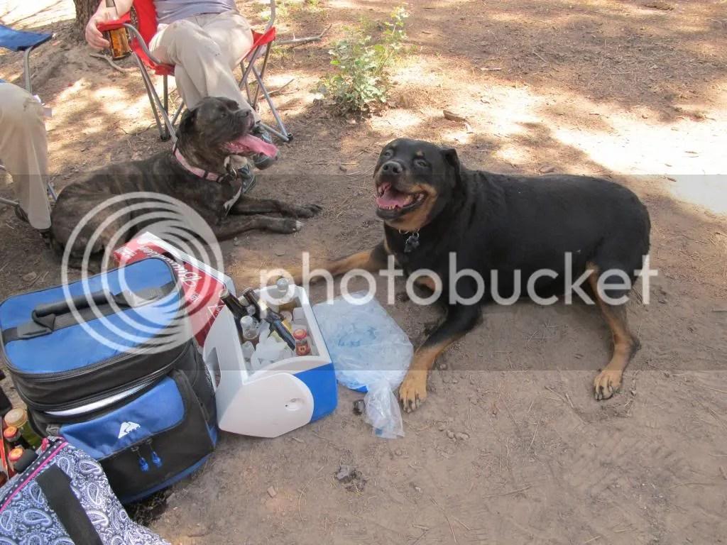 photo camping020_zps7b1b4ac3.jpg