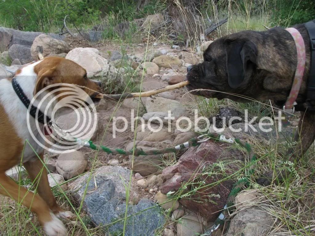 photo camping061_zpsec1ae994.jpg