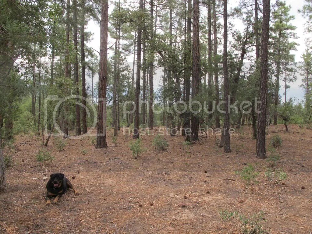photo camping073_zpsc690fe83.jpg