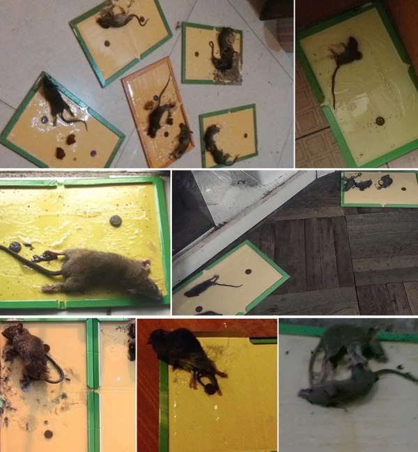 Large Sticky Mice Traps Super Strong Glue Board Rodent