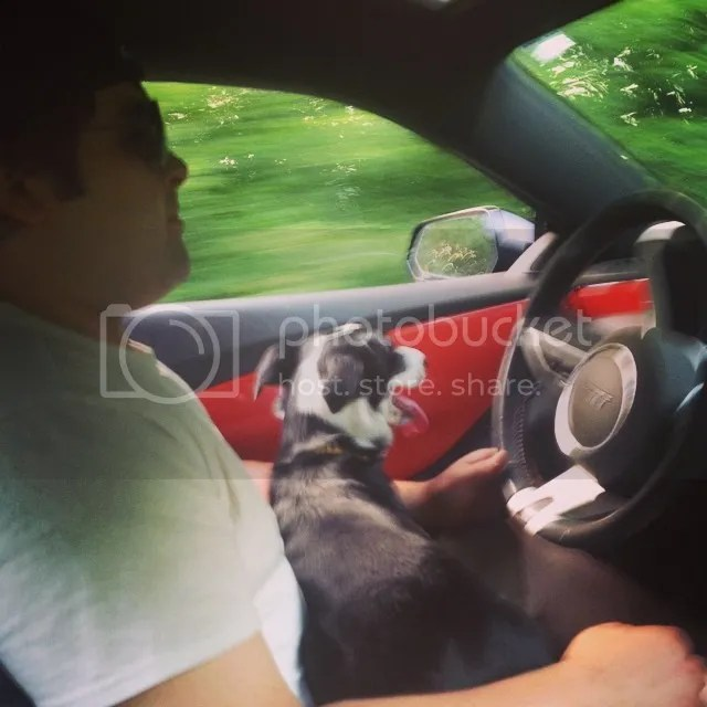 border collie, blog, guest post, dog, chevy camaro