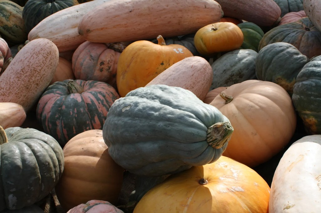 heirloom gourds