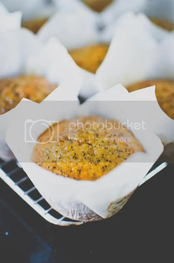 Orange and Apricot Jam Poppy Seed Muffins