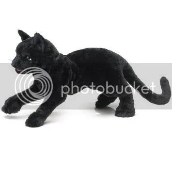 photo black cat_zpsegvianoe.jpg