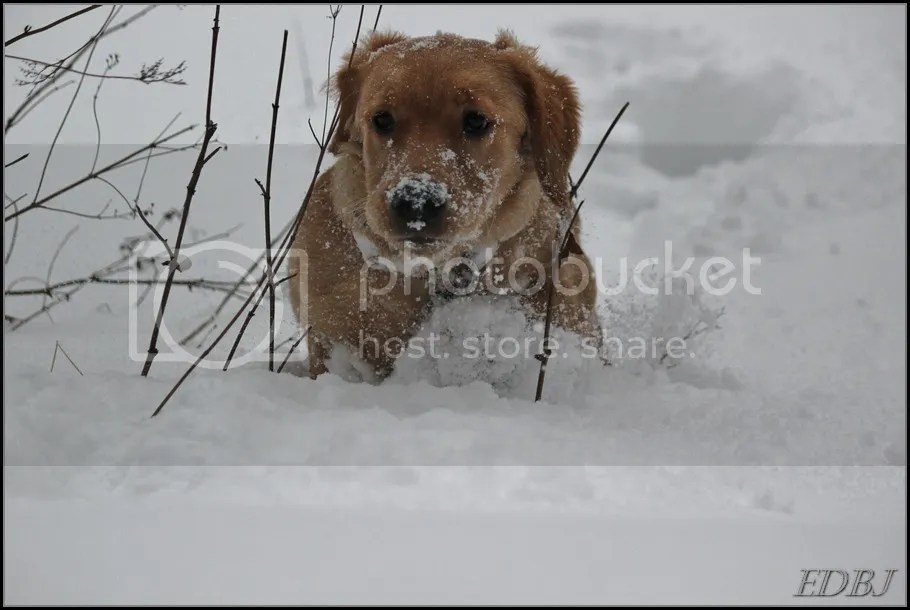 photo Vinterbilderjan14068_zps493fea55.jpg
