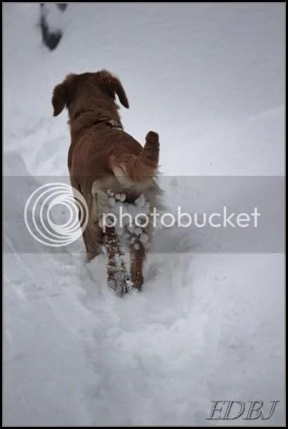 photo Vinterbilderjan14098_zps51f7a2c5.jpg