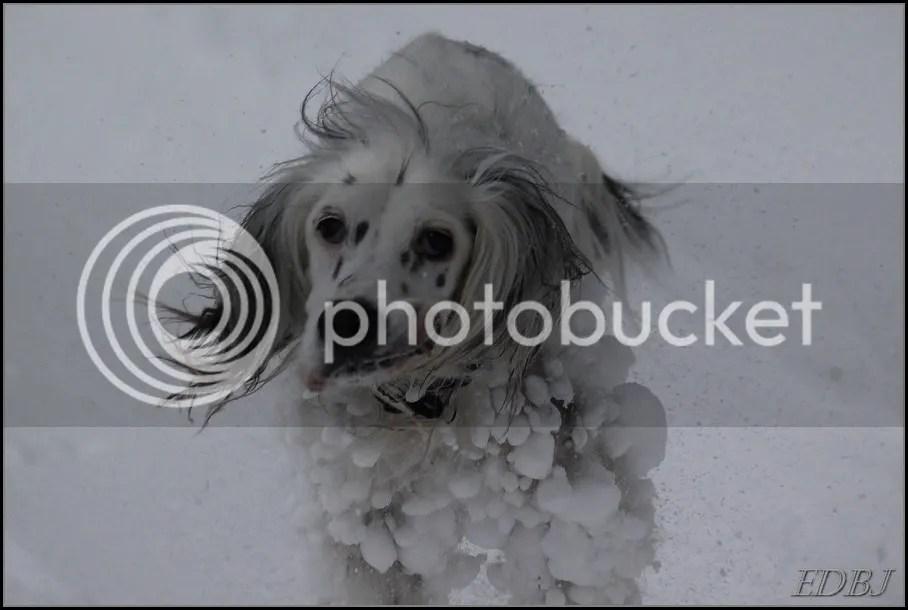 photo Vinterbilderjan14136_zpsbe2cf197.jpg