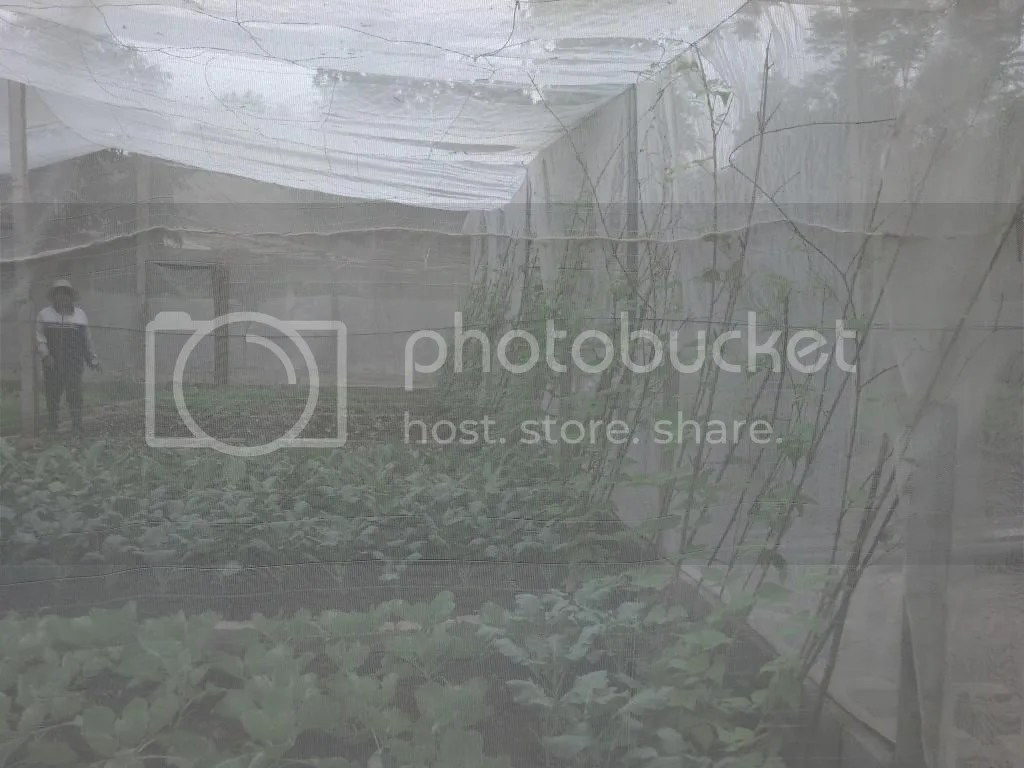 photo 2014-11-04_09-36-30_869_zpsee97b1cf.jpg