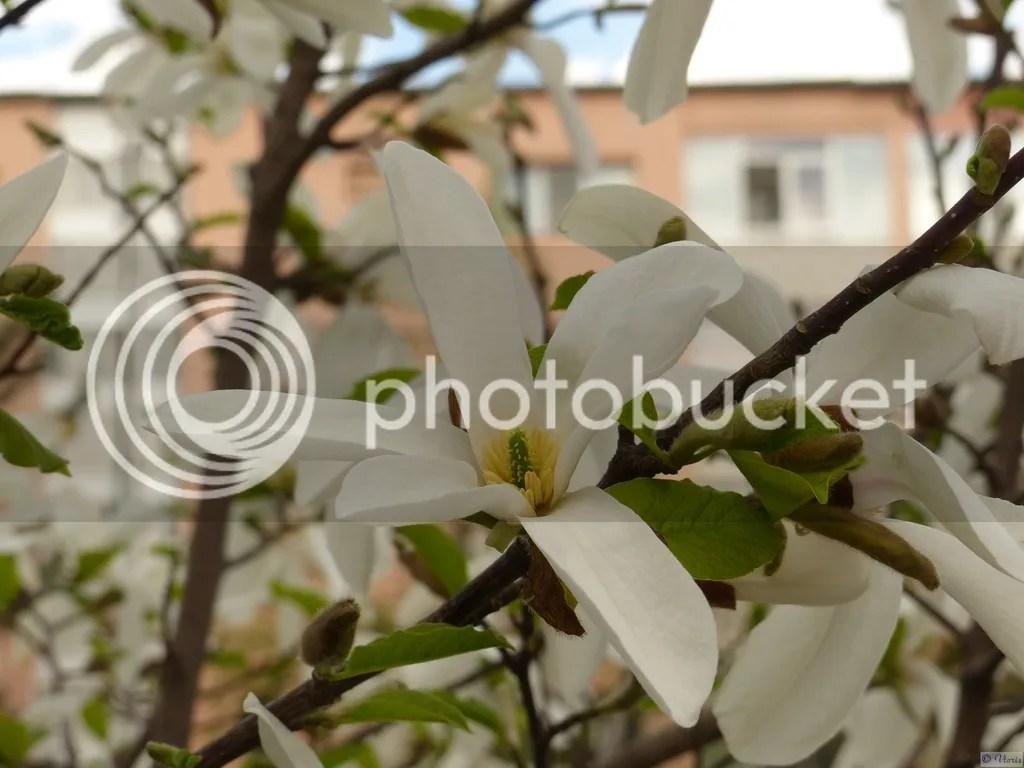 photo P2690451.jpg