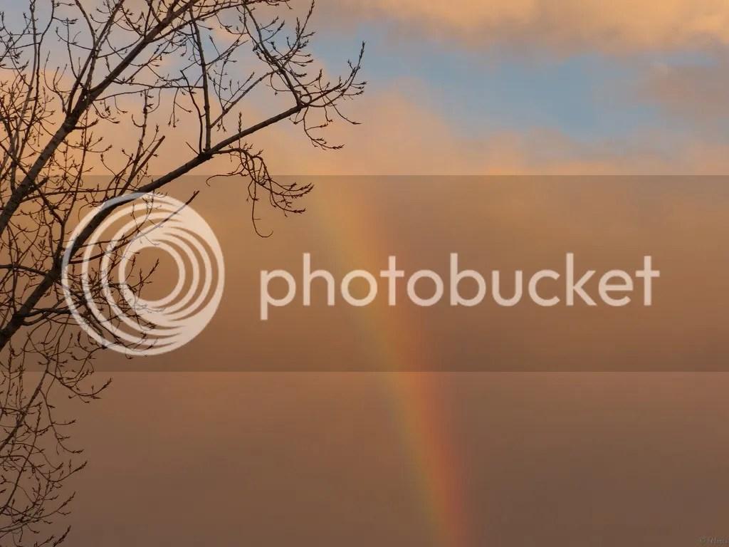 Photo P3100748.jpg