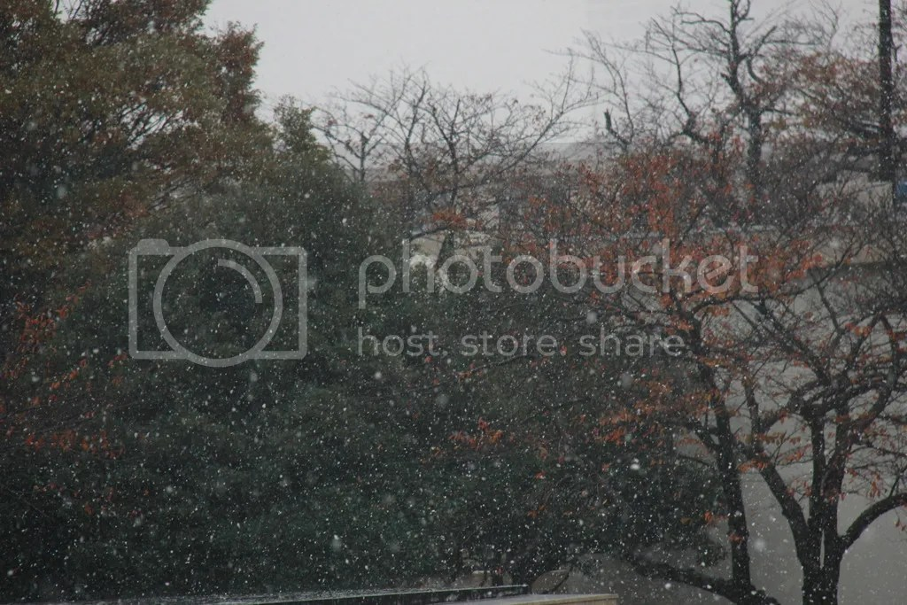 photo 24 November - snow Benfold Lighthouse THanksgiving 3_zpsltfreop3.jpg