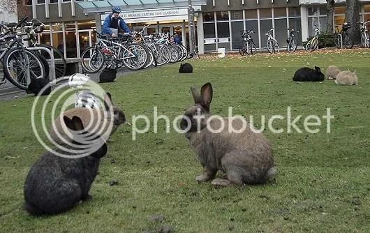 Những con thỏ nhảy múa.