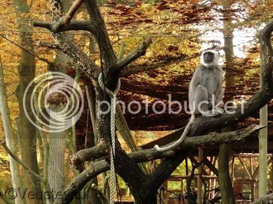 Deze meneer aap kijkt verschrikkelijk serieus