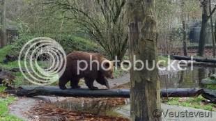 Beren op de weg... in dit geval op de boomstam in de dierentuin!