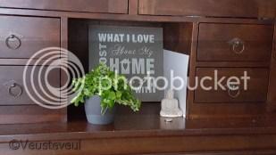 Groene vingers - het zou toch moeten lukken met vijf vetplantjes