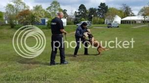 Beveiliging met honden op De Dreijen