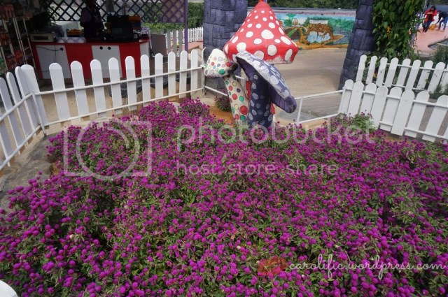 Cameron Lavender, Cameron Highlands, Travel, Malaysia, Pahang, Tourist Attractions, Things To Do, Where to Go, Travel Blogger, Diplomat's Wife,  Weekend Getaway, Flowers, Plants, Lavender, Roses, Strawberries, Mountain, Cool Weather