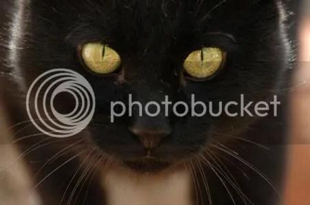 Gattoneroocchi.jpg Gatto nero occhi image by shy_1965