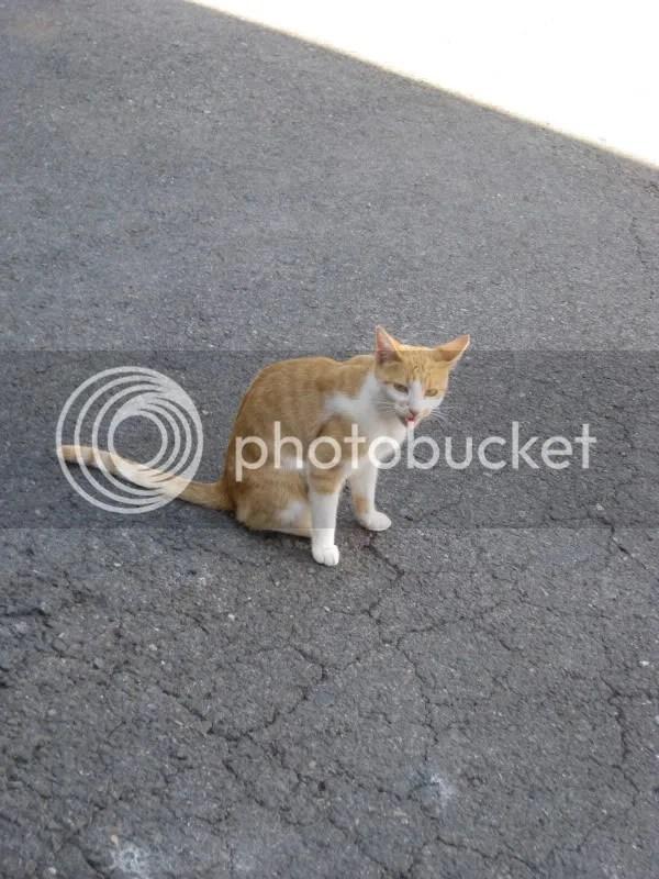 Brazen kitty.