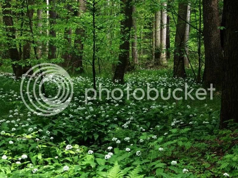 Spring in Janowski Forest