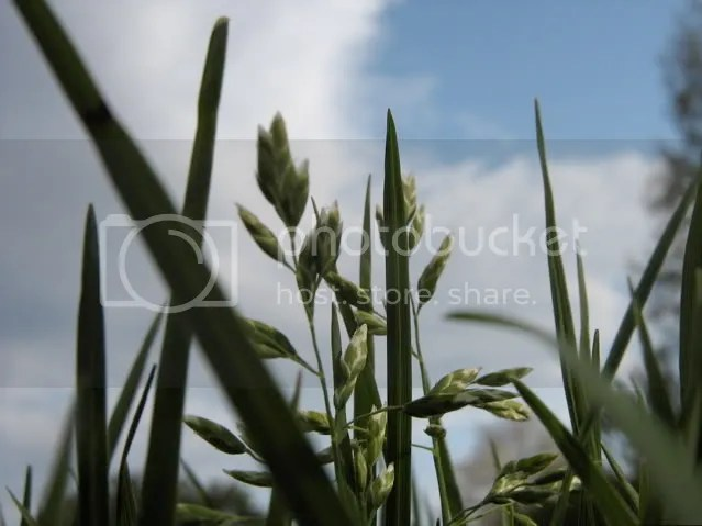 closeup grass shot