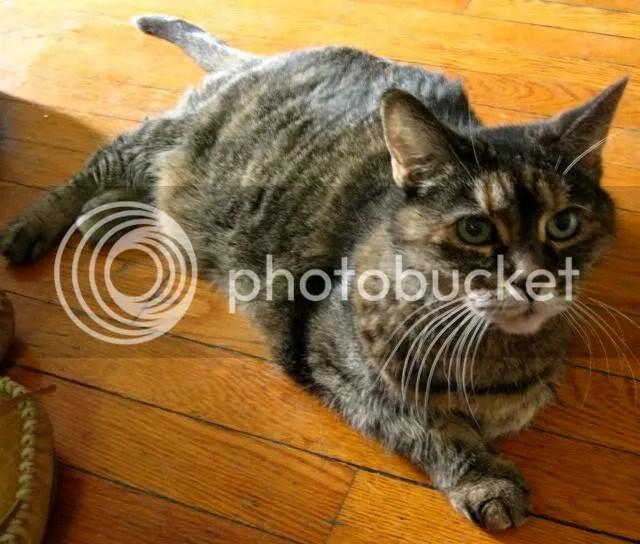 mchuge's cat called sweet pea