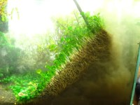 Ideal Carpet Plant for a 10 Gallon? - The Planted Tank Forum