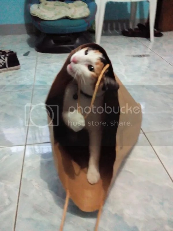 cats love playing with bags