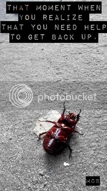 Beetle, struggle, myphone shot