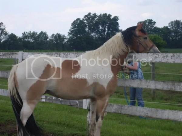 Tricolored paints Page 3 My Horse Forum
