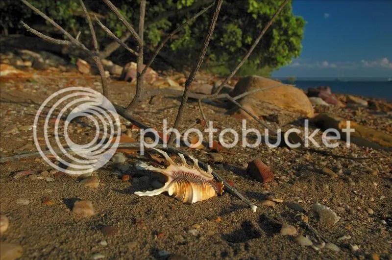 shells,Darwin