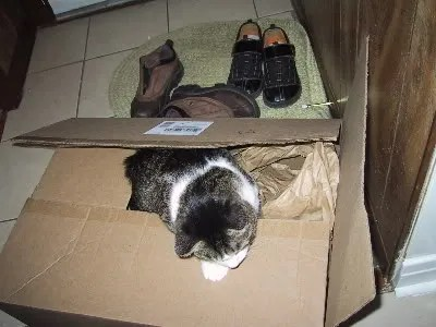 Ralphie in a box