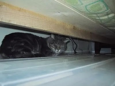 Studley living under the bed