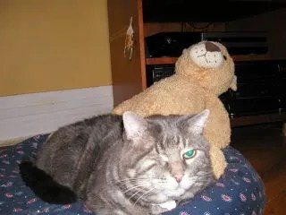 Studley sharing a moment with Hump-me the stuffed tiger?
