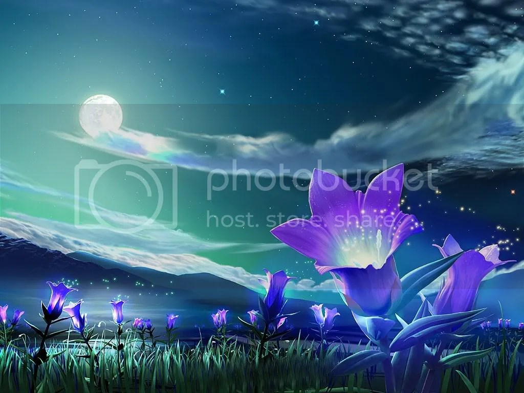 purple-flowers.jpg night flower image by taommy