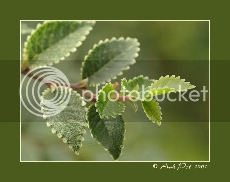 Log1-12-07-2.jpg